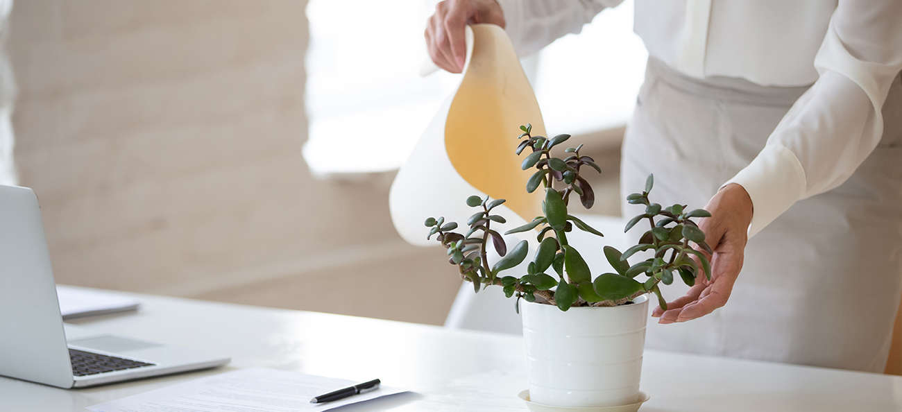 Cum te ajută apa ionizată să ai grijă de plantele tale?