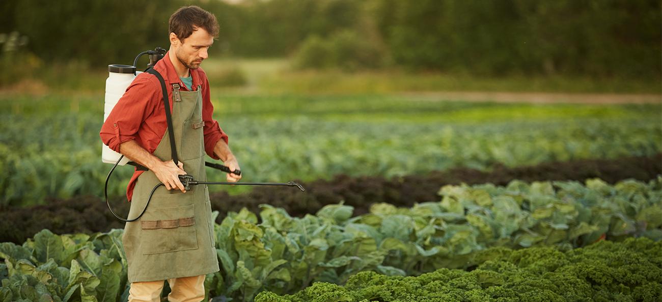 Tu știi câte pesticide consumi zilnic? Spală alimentele cu o soluție BIO de uz casnic pentru a înlătura pesticidele!