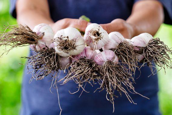 Beneficiile usturoiului și de ce să-l incluzi în alimentația ta!